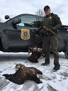Conservation Officer Jared Ferguson with poaches eagle
