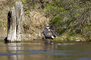 An angler enjoys a day on the Pere Marquette River.
