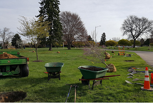 Wheelbarrows, shovels and other tree-planting equipment spread out over a greenspace DTE work area site