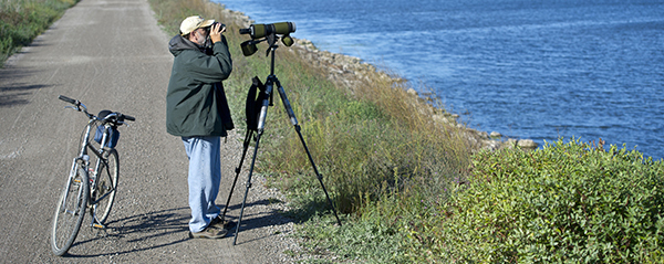 Birdwatcher looks through binoculars at wetland area with bicycle nearby