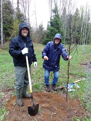 Two MUCC On the Ground volunteers, dressed in rain gear, planting trees in the Gwinn State Forest