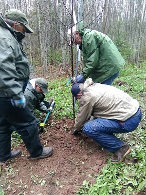 Group of men dressed in rain gear, planting a tree
