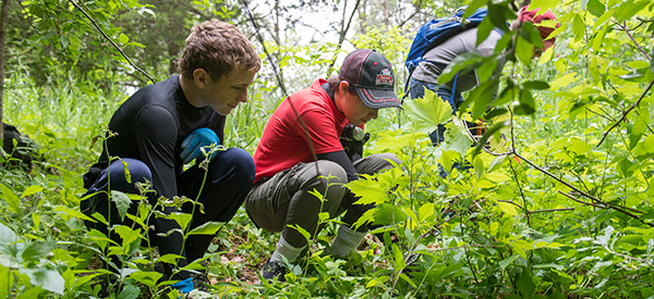 two young men remove invasive plants at state park