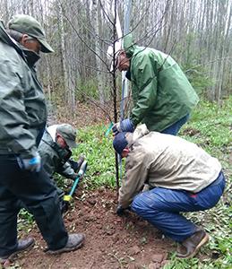 group of volunteers planting tree