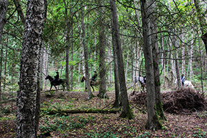 A group of horseback riders moves through the woodlands at Mackinac Island State Park.