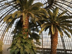 Palm trees growing within the conservatory