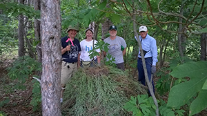 stewardship volunteers pull knapweed