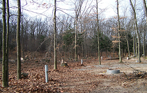 Hoffmaster State Park campground after oak tree removal