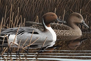 2019 Michigan duck stamp print by Paul Bridgford; image cropped at bottom for newsletter formatting and spacing