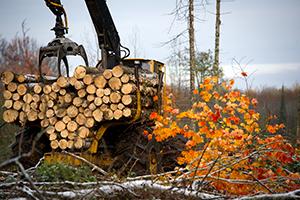 truck picking up cut logs