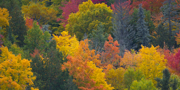 colorful fall forest in Ontonagon County, Michigan