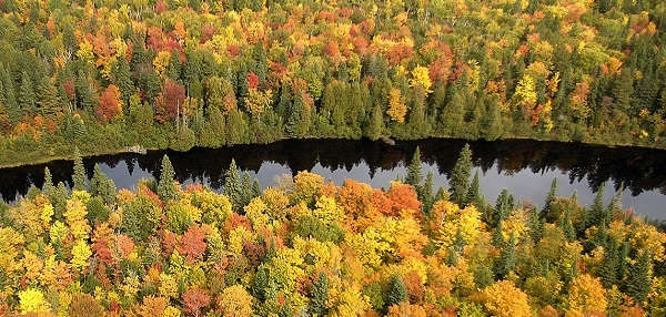 aerial view of the Tahquamenon River and surrounding fall forest