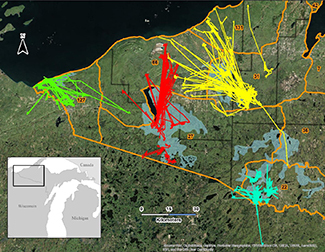A colorful map shows deer movements in the Upper Peninsula.