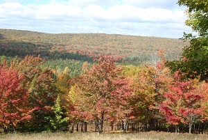 a view of red, orange and gold fall color on the trees on the Storey Lake property in Otsego and Cheboygan counties