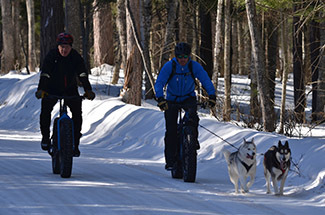 Two men ride fat tire bikes on a road, with two dogs on leashes.