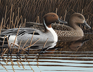 A northern pintail drake and hen as depicted on the 2019 Michigan duck stamp are shown.
