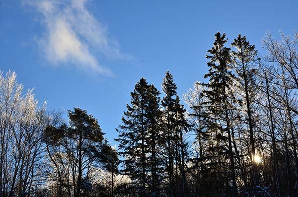 Clouds float by in a clear blue sky above ice-covered trees.