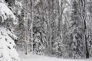 A picturesque snow scene after a winter storm. Trees are packed with fresh snow.