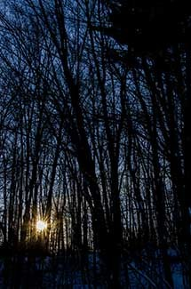 The sun drops behind a stand of hardwood trees.