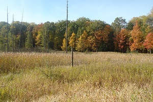 an open field surrounded by autumn-colored trees, near Manistee National Forest
