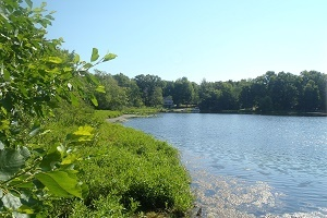 a view of Lower Scott Lake in Allegan County