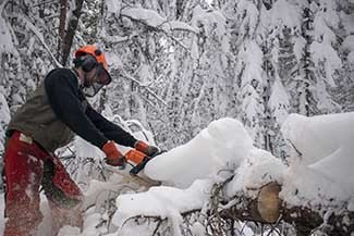 A man cuts a downed tree with a chainsaw.