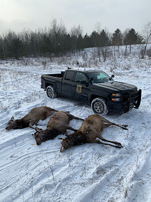 Three elk-poached-12172019