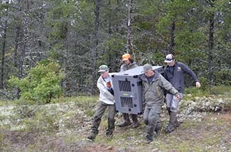 Four people carry a wolf out of a forest in an animal carrier.