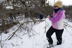 Volunteer carrying invasive shrubs for removal