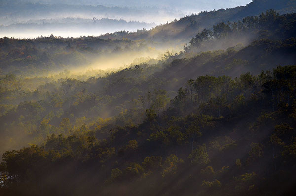 Early morning sunlight and mist cover a hillside