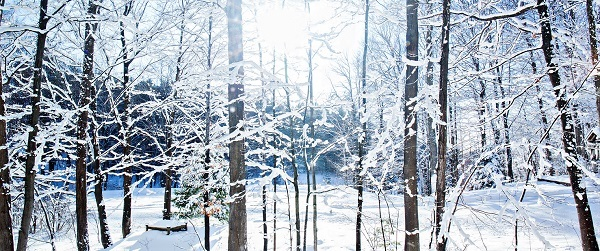 sunlight filtering through barren trees in a snowy forest