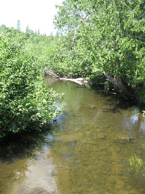 A section of the Black River