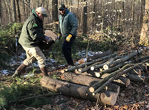 DNR staffer and volunteer build brush pile in forest