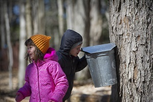 A young boy and girl in winter gear near a bucket hanging on a maple tree that's been tapped to collect sap