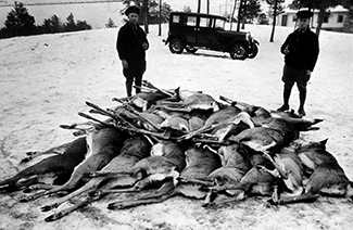 Two conservation officers stand behind a pile of winter-killed deer in the early 1930s.