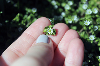 A small wildflower is pictured between the fingers of an educator.