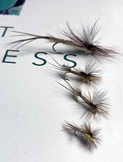 """A handful of Roberts' Yellow Drake flies are shown on the cover of a copy of """"Trout Madness"""" by Robert Traver."""