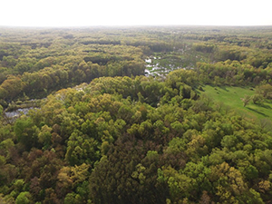 aerial photo of green forest with river running through it