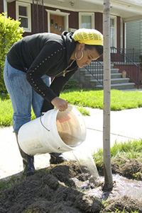 woman using bucket to water newly planted tree near sidewalk in residential neighborhood