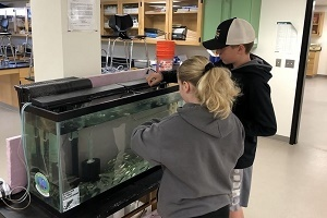 back view of a girl and a boy pulling salmon fry from a classroom tank