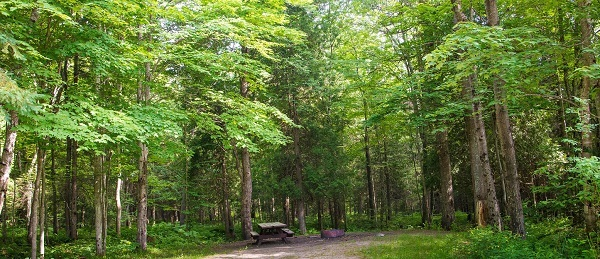 A scenic view at Black River State Forest Campground