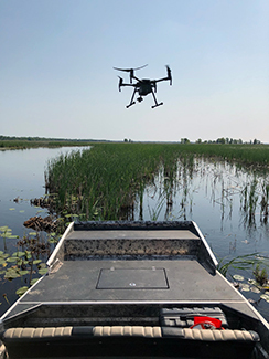 A drone is shown hovering over a wetland area where a project to locate tern nests was ongoing.