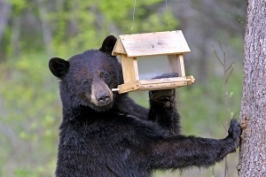 upright black bear with one paw on tree, the other pushing on a bird feeder