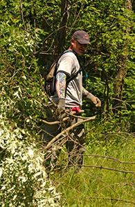 volunteer removes brush from forest