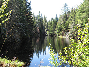 scenic wooded pond at Crisp Point