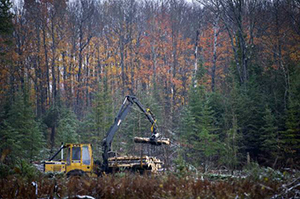 equipment moving timber in forest