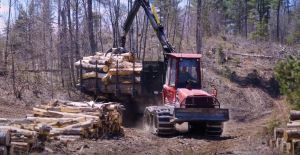 Logging equipment is used to move cut timber
