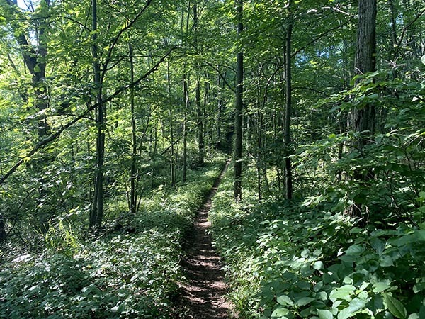 A trail leading through a green forest welcomes visitors.