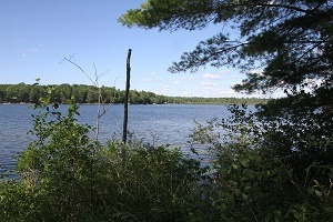 A water view from a land parcel on Dyer Lake in Missaukee County, available through the DNR's 2020 surplus land auction
