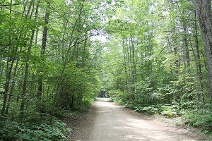 A forested trail view on a 3.7-acre lot with access on Boardwalk Road near Lake Marjory in Otsego County